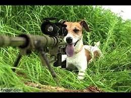 sniperdog